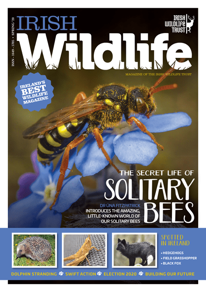 Irish Wildlife Spring 2020 Cover