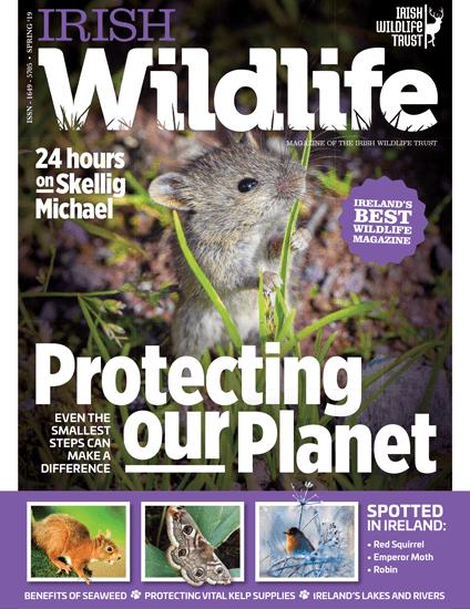 Irish Wildlife Spring 2019 Cover