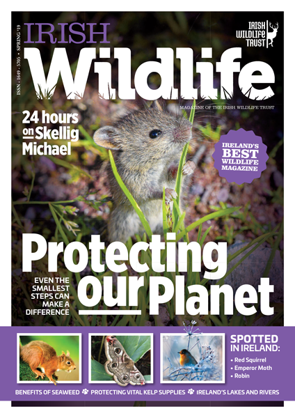 Irish Wildlife Spring 2019 Cover