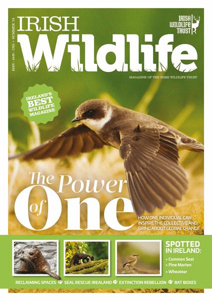 Irish Wildlife Summer 2019 Cover