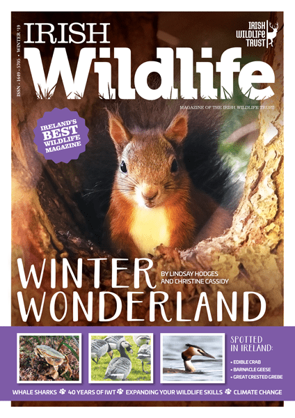 Irish Wildlife Winter 2019 Cover