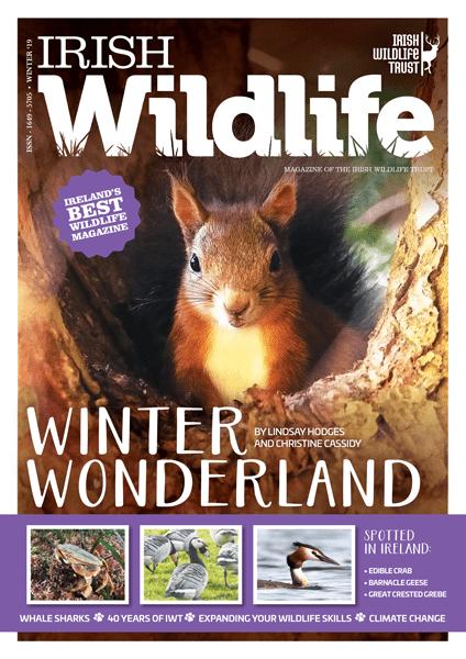 Irish Wildlife Winter 2019 Cover