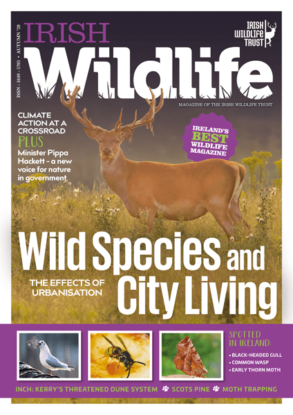 Irish Wildlife Autumn 2020 Cover