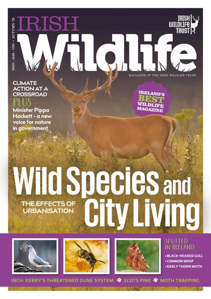 Irish Wildlife Autumn 2020 Cover