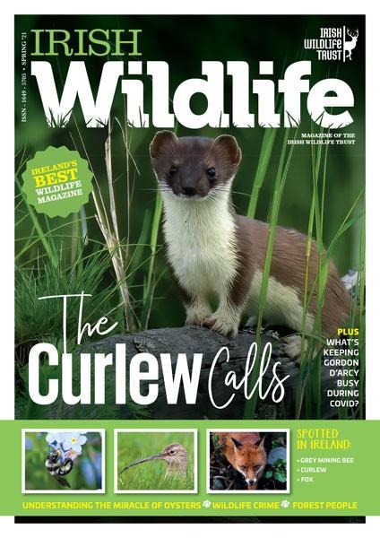 Irish Wildlife Spring 2021