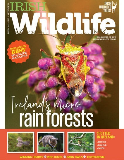 Irish Wildlife Trust Autumn 2021